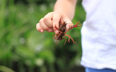 crayfish care