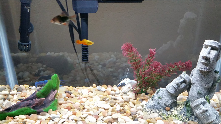 Why Are My Fish Swimming at the Top of the Tank?