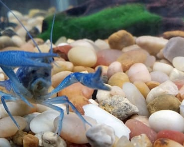 What is a good starter fish tank for crayfish for Best starter fish