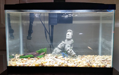 the best desktop aquarium