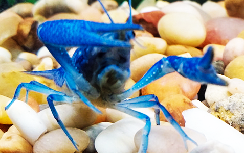 should you get your crayfish a hideout