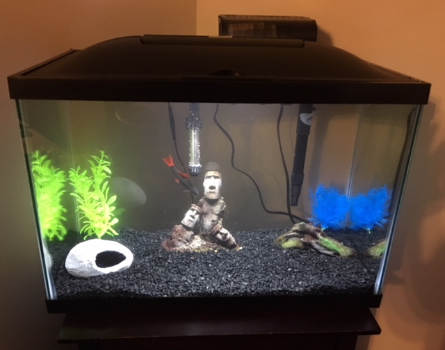 which fish tank is best