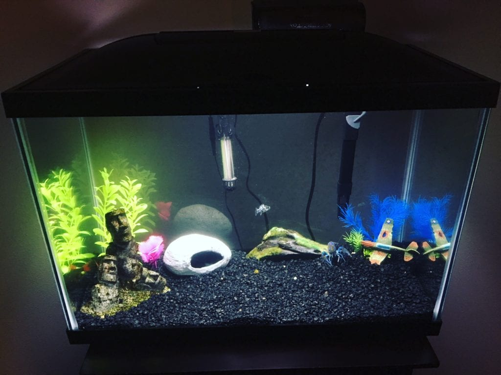 how do you set up a crayfish tank learn the steps