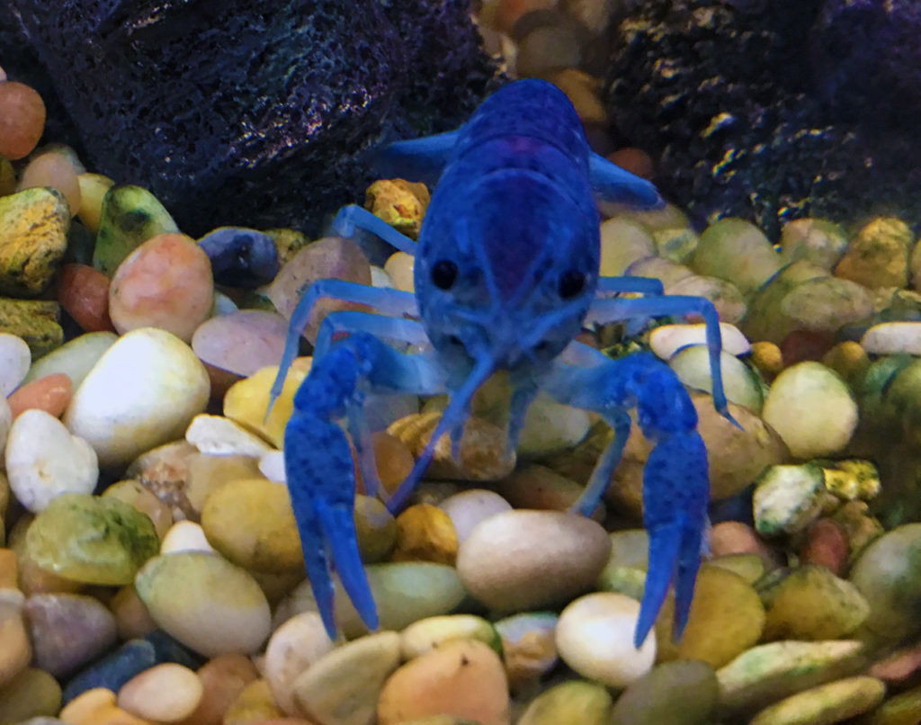 What Is The Best Fish Tank For A Crayfish