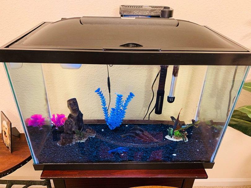 Best 20 Gallon Fish Tank Kit Of 2020