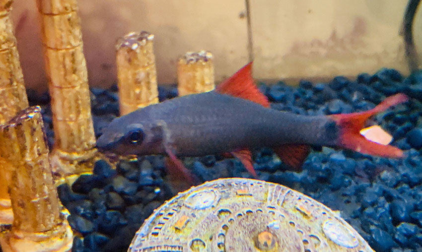 Fish For Freshwater Tanks 22 Most Popular Fish For Your Aquarium 2021